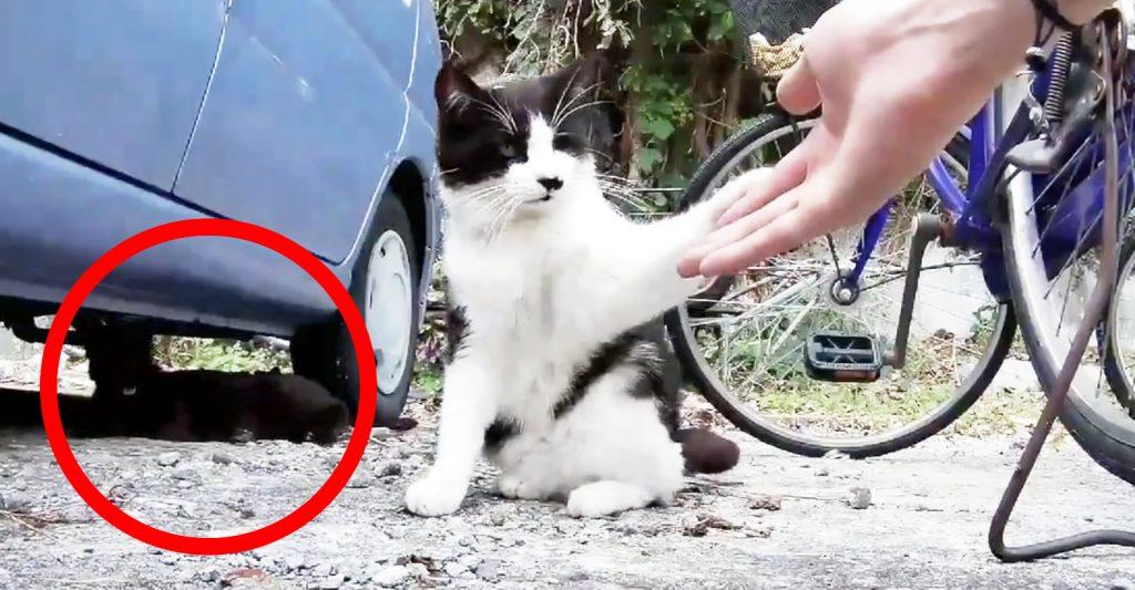 野良猫に噛まれて猫パンチされてしまうも、もう一匹のフォローが紳士的すぎたと話題に!