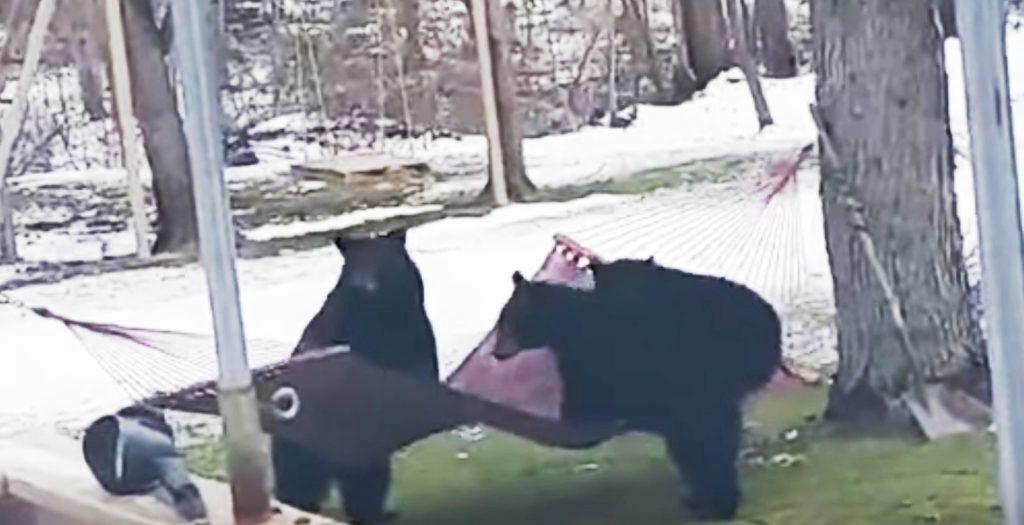 ハンモックにどうしても乗りたい熊たち。しかし、ハンモックに乗るのは難しかった^^;