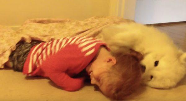 どうしても女の子にアゴを乗せたいサモエドの子犬が可愛い!