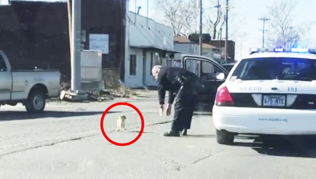 路上で小さなチワワを発見した警察官。チワワに心を開かせた行動が心温まると話題に!
