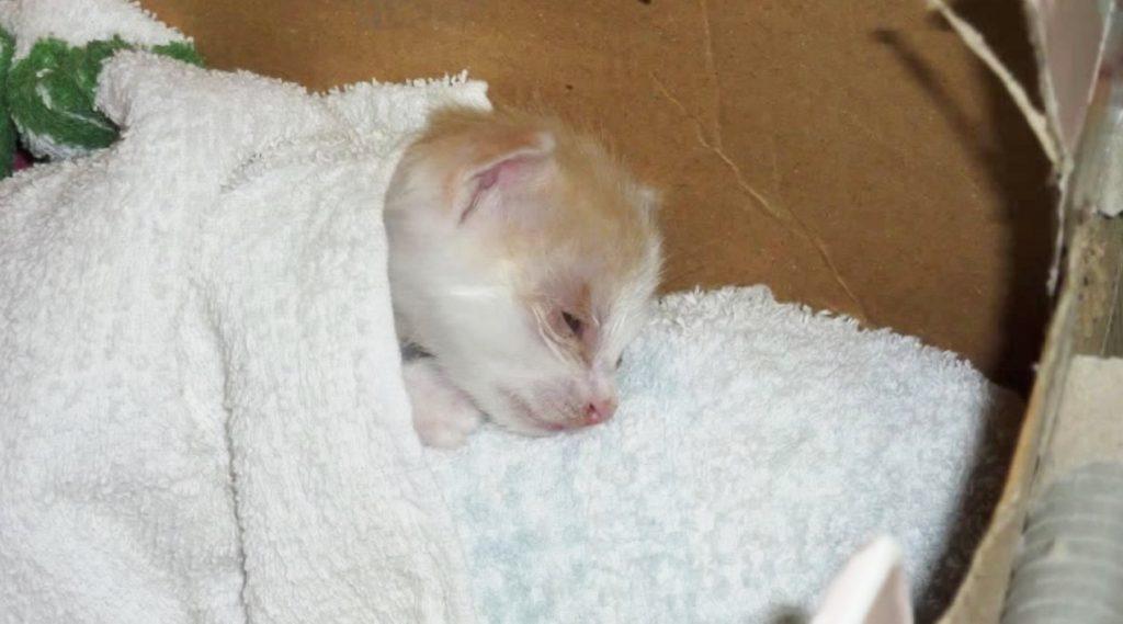 息子が拾って来たボロボロの子猫。「いきなり死を体験させて良いものか。。」悩んだものの何事も経験。「飼って良かった」