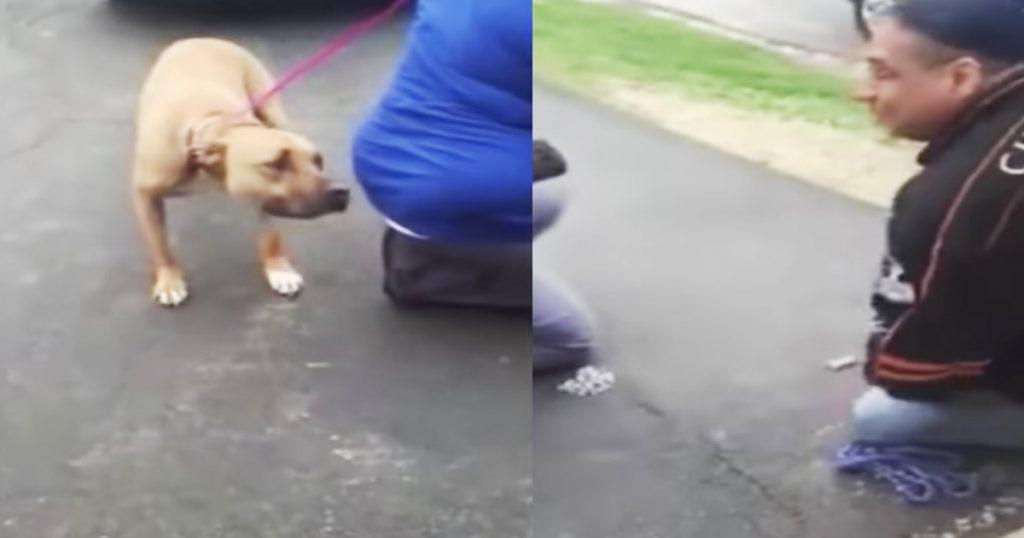 誘拐され、2年ぶりに飼い主と再会するも拒絶する犬。しかし匂いを嗅ぐと、感動的なリアクションをとる!
