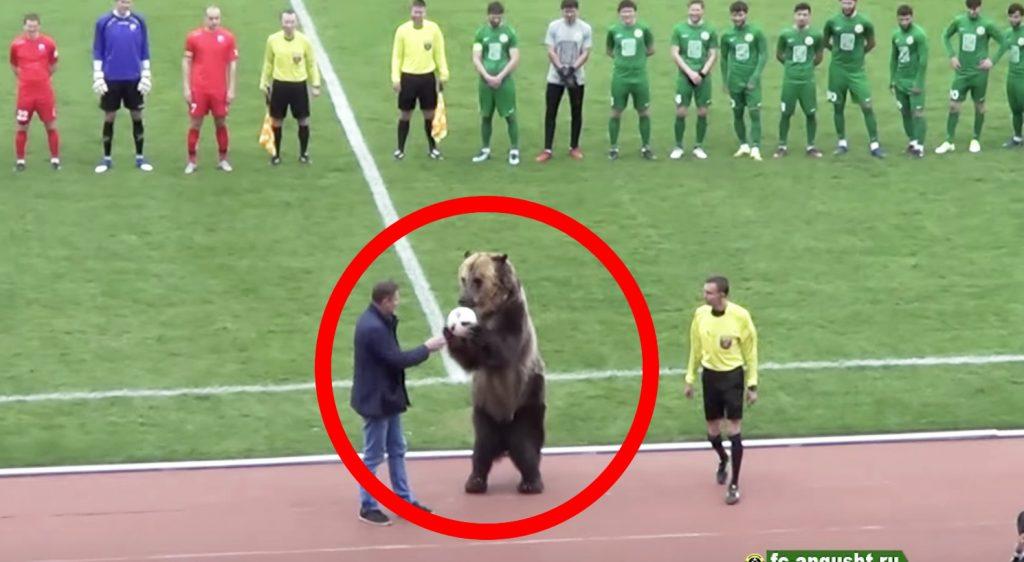 【ロシア】サッカーの始球式を本物の「ヒグマ」が行う!中に人間が入っているようにしか見えない!
