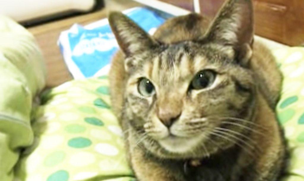 お風呂好きな猫に「お風呂行く?」と聞いたら、可愛い返事が帰ってきた!