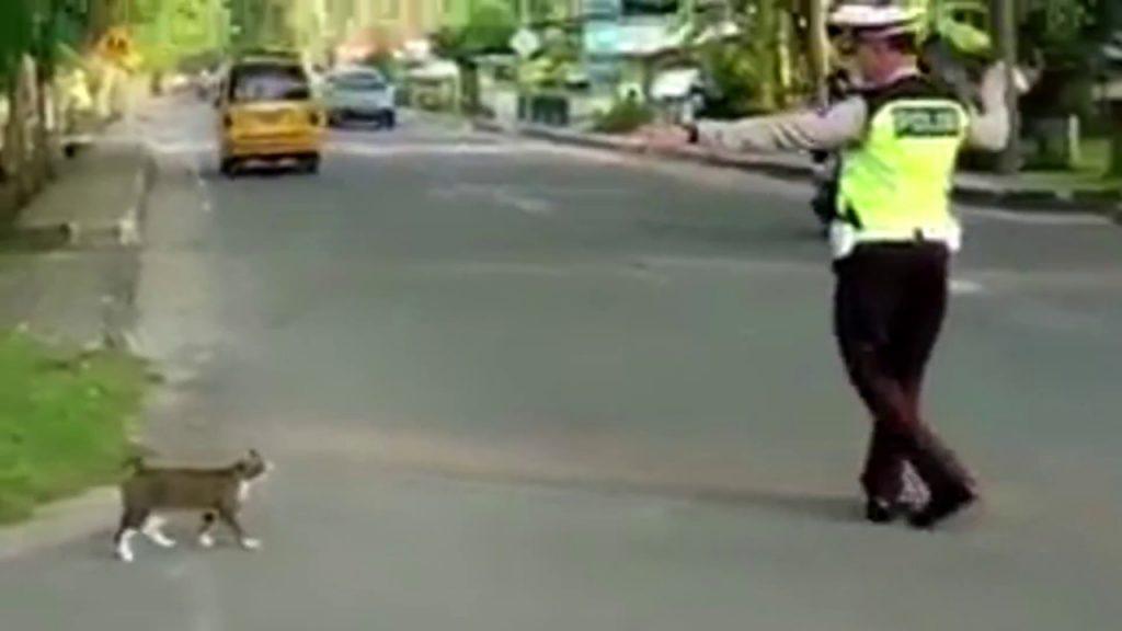 猫を誘導し道を安全に渡らせてくれた警察官。誘導に従う猫もナイス^^
