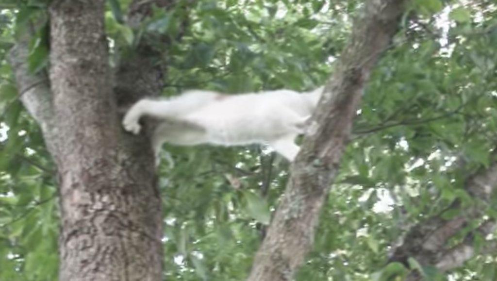 子猫のピンチに駆けつける母猫!しかし、甘やかすだけではない母猫の「助け方」が愛に溢れてる^^