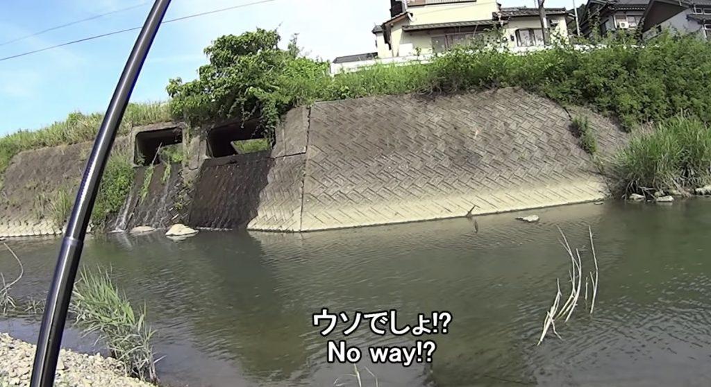 川に釣りに来たら、海にいるはずの魚ばかりが大量に釣れてびっくり!