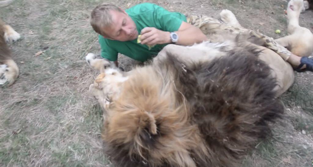 「羨ましすぎる!」親友の男性のハグに、ライオンも心許してテロテロに^^