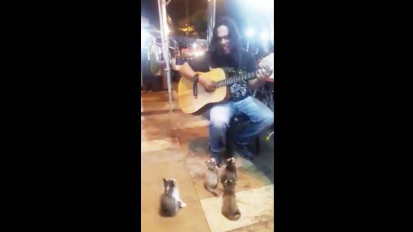 路上ミュージシャンの素敵な歌に聴き入る4匹の子猫たちが可愛い!音楽は種をも超える!