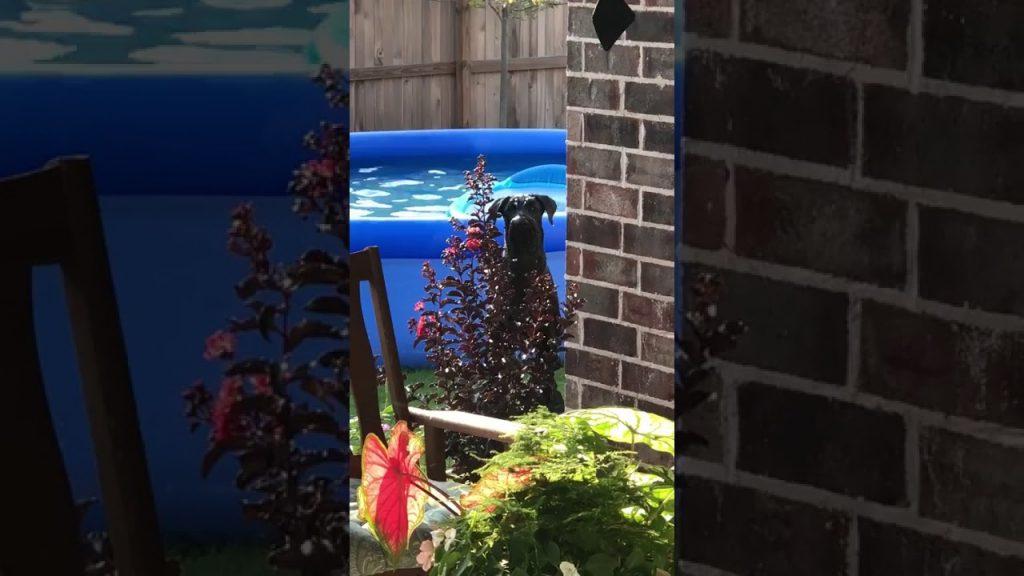 庭のプールで遊んでいたことがバレた犬の反応が可愛いすぎると話題に!