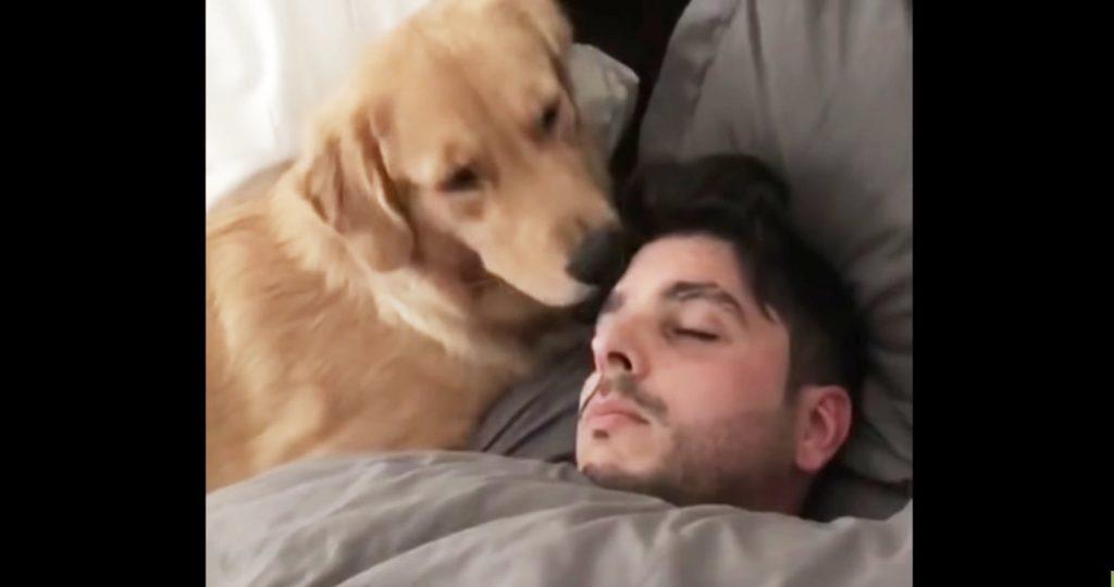 寝ている飼い主さんを優しく起こそうとする犬。なかなか起きないので取った行動が愛らしすぎる^^