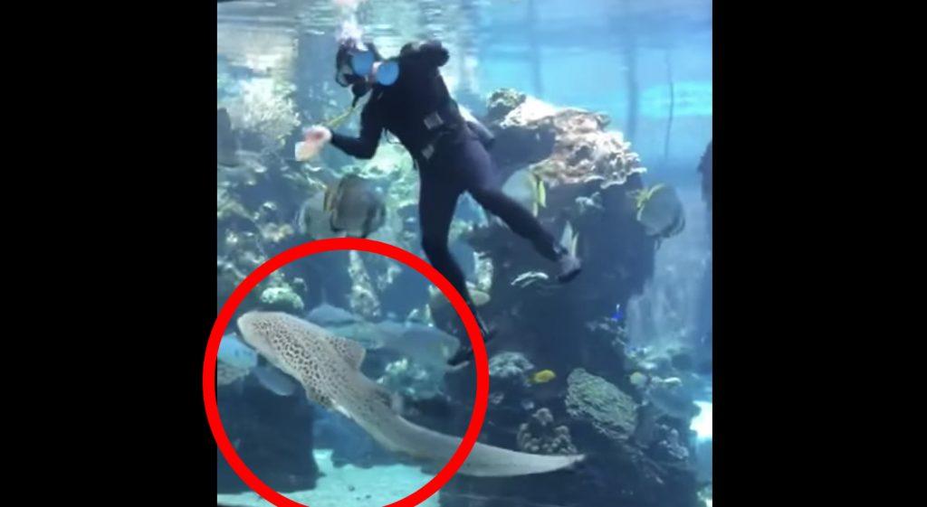 「お腹を撫でて〜!」と仕事中の飼育員さんに甘えてくるサメが、犬にしか見えない可愛さ!
