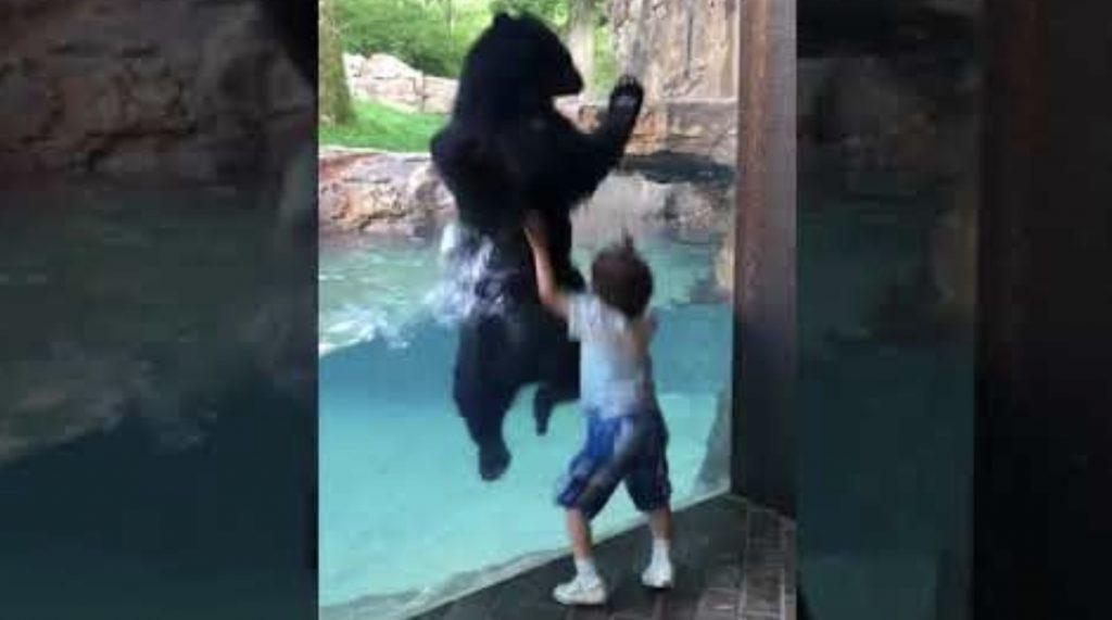 いつも訪れる動物園の熊と仲良しになった少年。一緒になって大はしゃぎする姿が話題に!