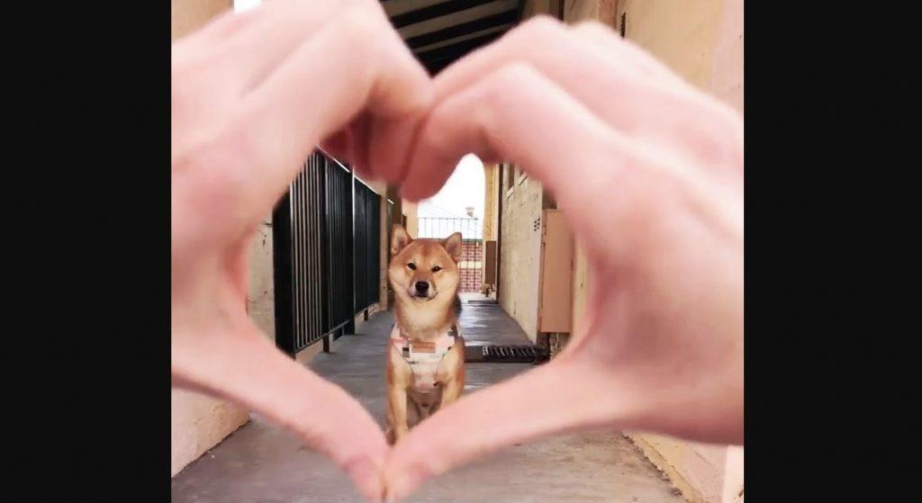 柴犬の前でハートマークを作ったら、超可愛い行動をしたと話題に!