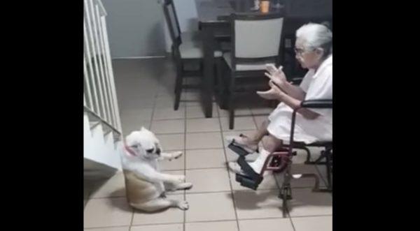 おばあさんの歌に合わせて、ヘンな格好でヘンなダンスを踊るフレンチブルが可愛すぎる!