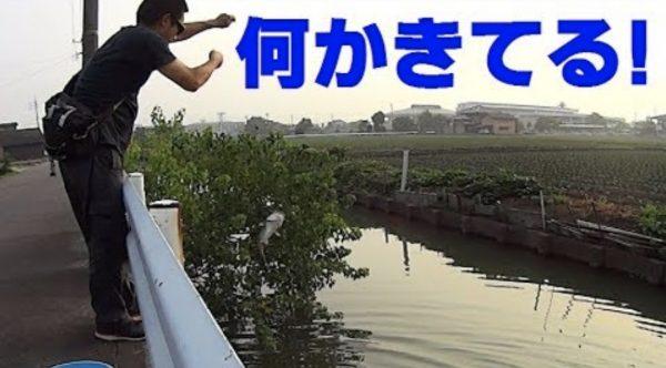 住宅地の用水路に罠を仕掛けてみたら、大物が釣れた!