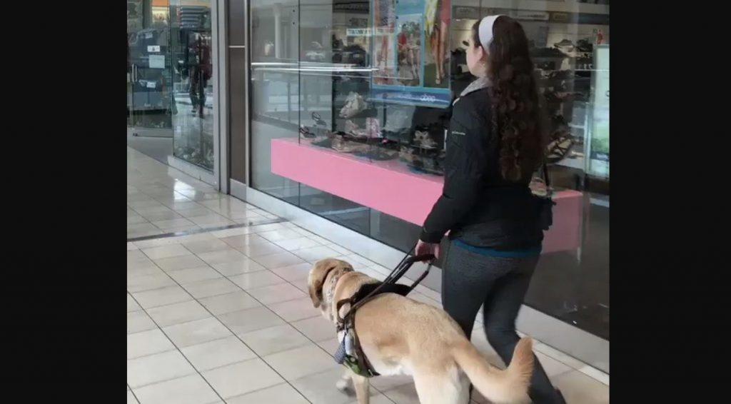 ペットショップの前を通った盲導犬が、うっかり可愛いミスをしてしまう動画が話題に!「これは仕方がない」