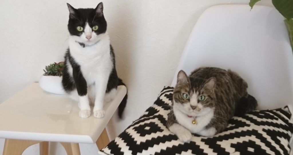 どっちの猫が本物?「羊毛フェルト」で作られたリアルすぎる猫が話題に!