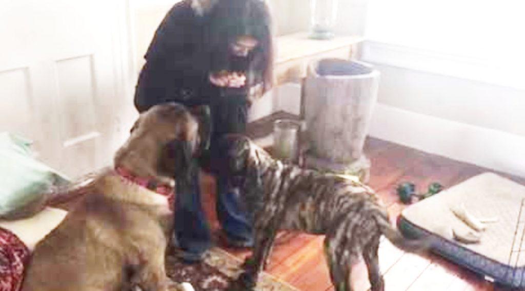 「お座り」が出来ない仲間に、やり方を教えてあげる犬の友情と賢さに感動!