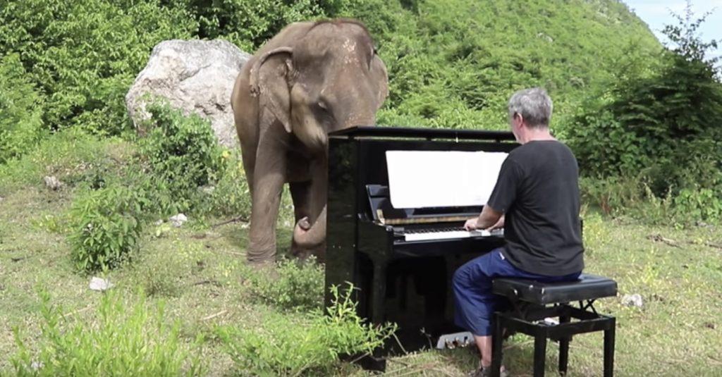 盲目のゾウに美しいピアノ演奏を聴かせたら、感動的な反応をした!