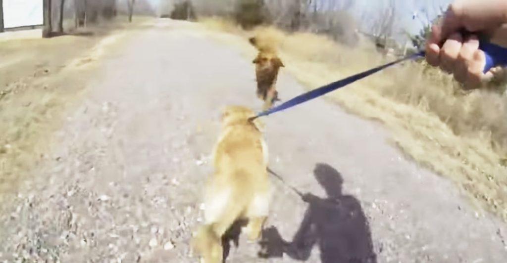 小さな頃に母犬と離れ離れになった子犬。久しぶりの再会を喜ぶ姿に感動!