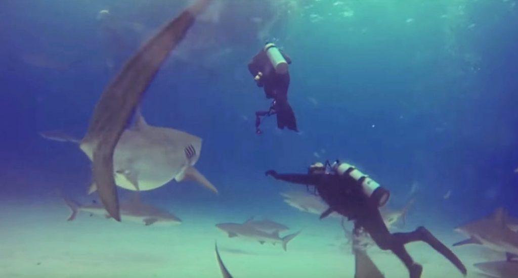 ダイバーを襲おうとした大きなサメを、仲間のダイバーが手で阻止する動画が話題に!