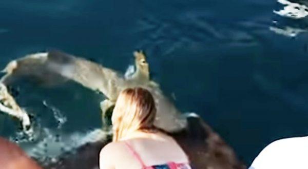 野生を侮ってはいけない、、サメに餌付けしていた女性が海に引きずり込まれてしまう!