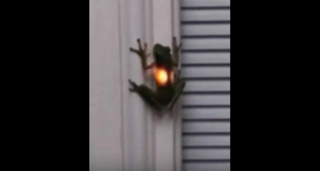妖しく光るカエルが発見され話題に!光っていた理由に驚きの声
