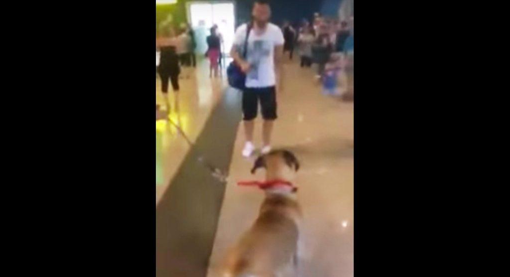 3年ぶりの飼い主さんとの再会で驚いて固まってしまった犬。数秒後の犬の行動に感動!