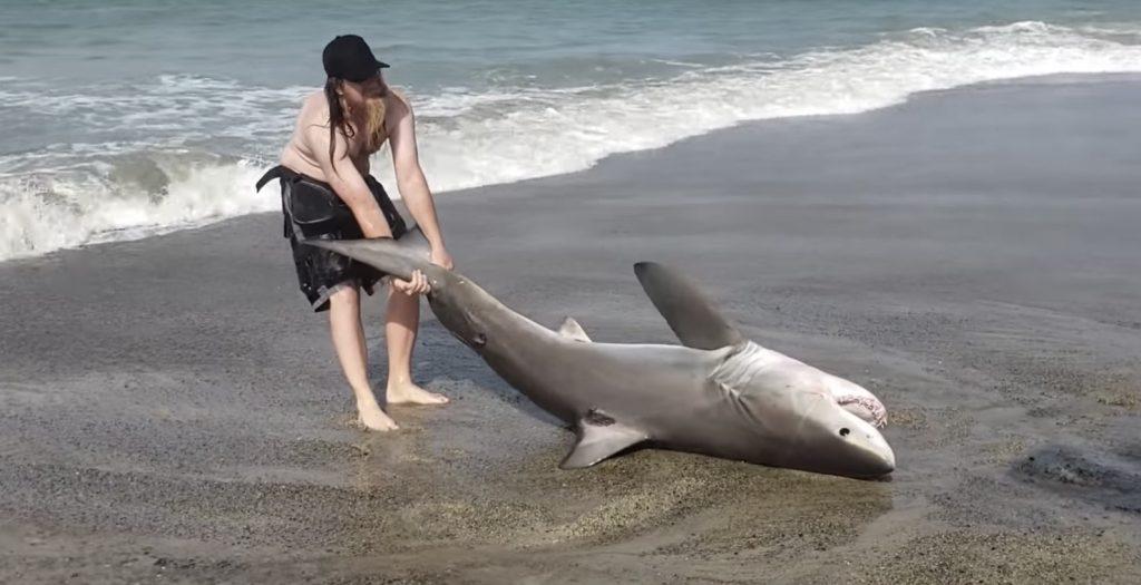 危険を顧みずビーチに打ち上げられた「ホオジロザメ」の子供を救助する男性たちが話題に!