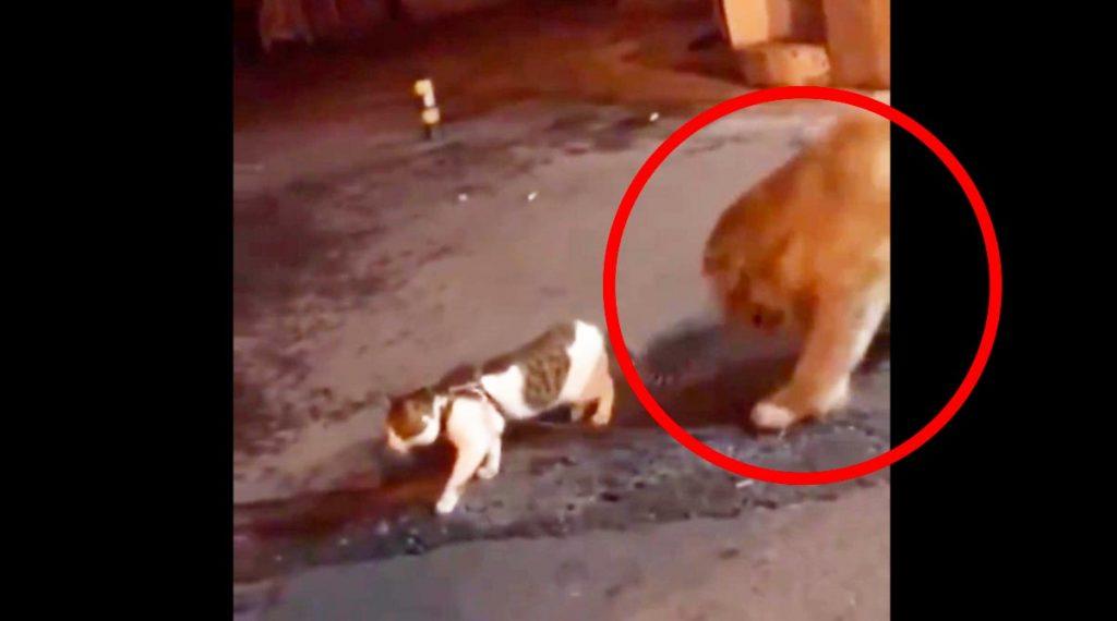 【神対応】猫のケンカを見たゴールデンレトリバーの対応がかっこいいと話題に!