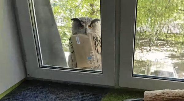 手紙を届けるフクロウが愛らしいと話題に!「ハリーポッターの魔法使い!」「抱きしめたい」などの声