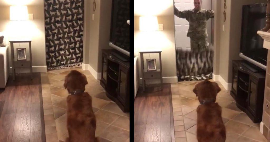 「人が消えるマジック」かと思ったら、兵役中の息子がサプライズ帰還!犬の反応に涙!