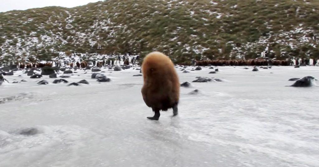 ひょこひょこ歩くモフモフの可愛すぎる生物。誰もが知っている動物だと知ってびっくり!