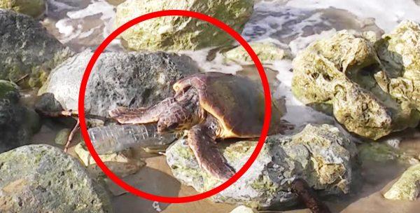 海岸にいたウミガメ。くつろいでいるだけと思いきや、人間のせいで酷すぎることになっていた