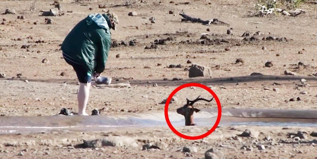 「助けてくれるの?」泥にハマったインパラ。一人の男性が近づくと少し安心したようだった