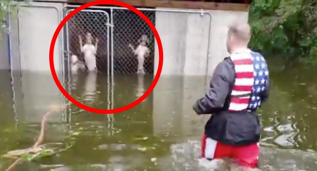 ハリケーン・フローレンスによる洪水で、檻に取り残された6匹の犬の救助動画が話題に!隊員を見て嬉しそうにする姿に涙