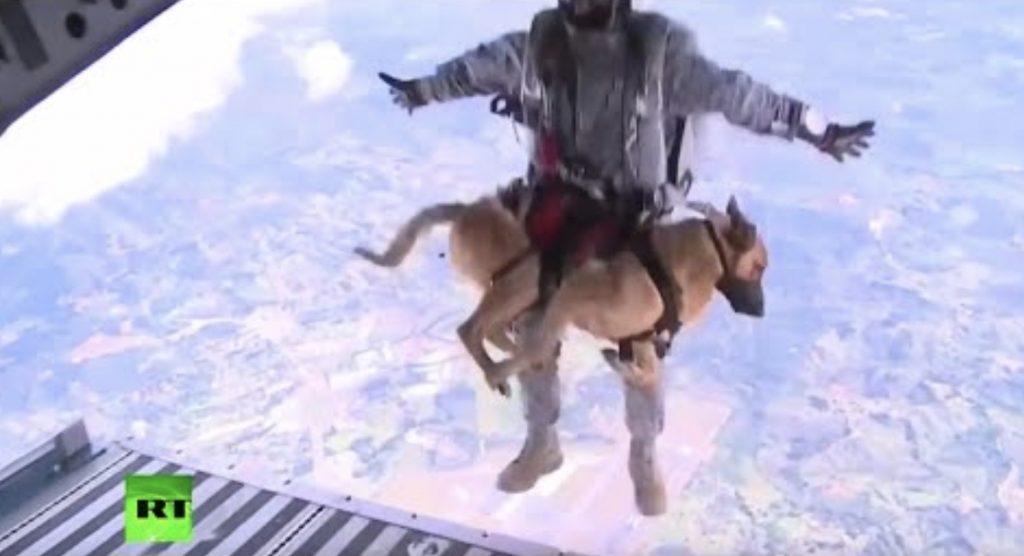 パラシュート降下訓練を行う救助犬の落ち着きっぷりがさすが!「とても信頼しているんだね」の声