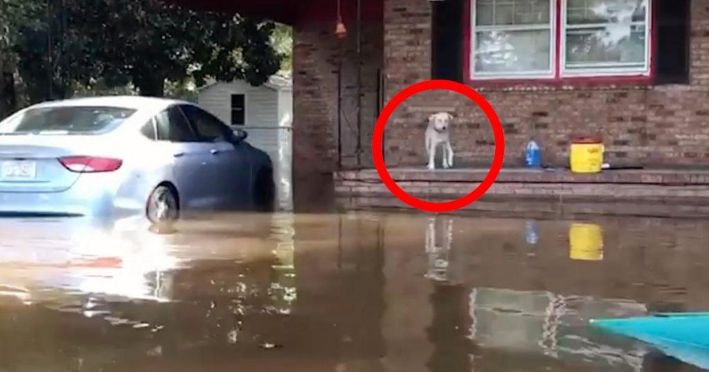 洪水で家に置いてきぼりにされた犬。救助隊員に助けられた瞬間の嬉しそうな表情に涙
