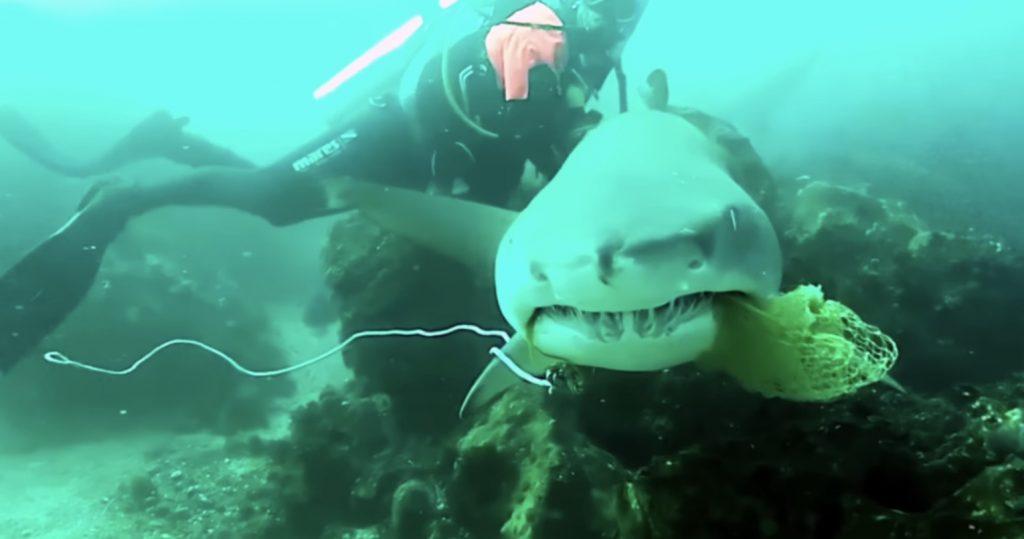 網が絡まったサメを助けたダイバー。すると「ありがとう」と感謝の気持ちを伝えてきた!