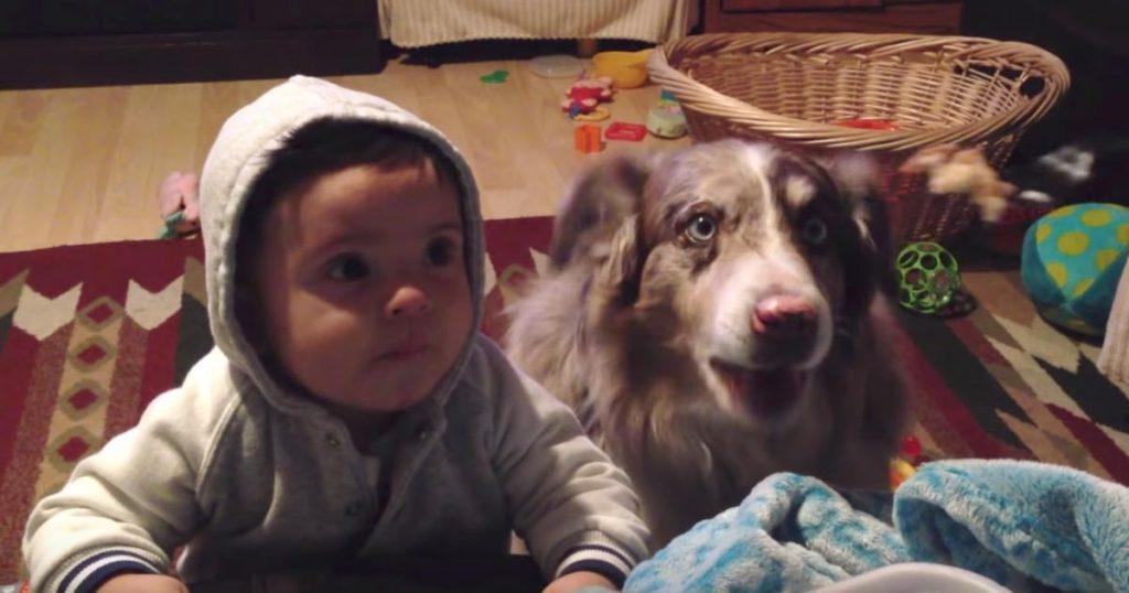 赤ちゃんに「ママ」という言葉を教えていたら、犬の方が先に覚えてしまった笑「完全にママと言っていて爆笑」