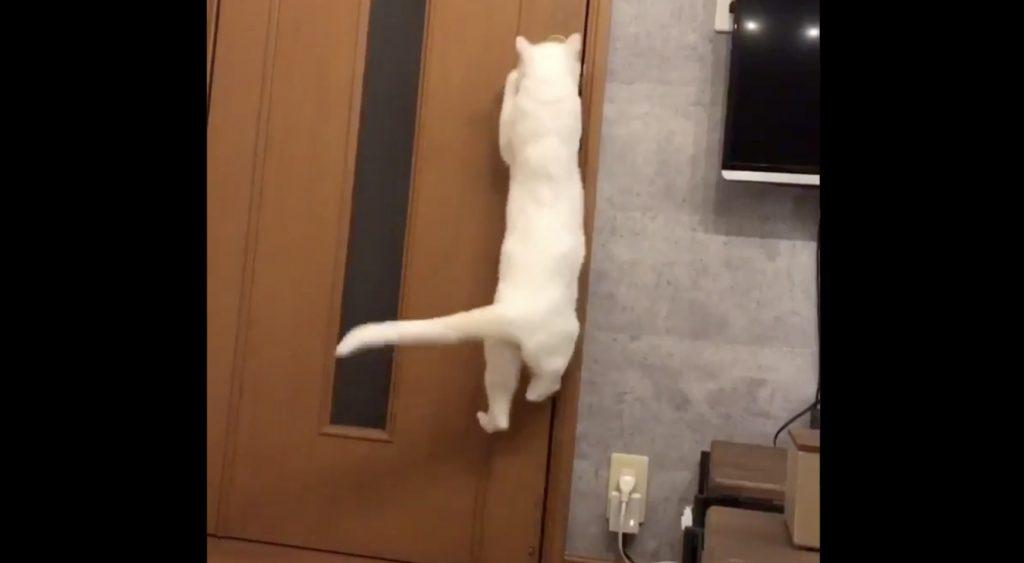 猫がドアを開けられないように改造したら、猫語で文句を言ってきた!