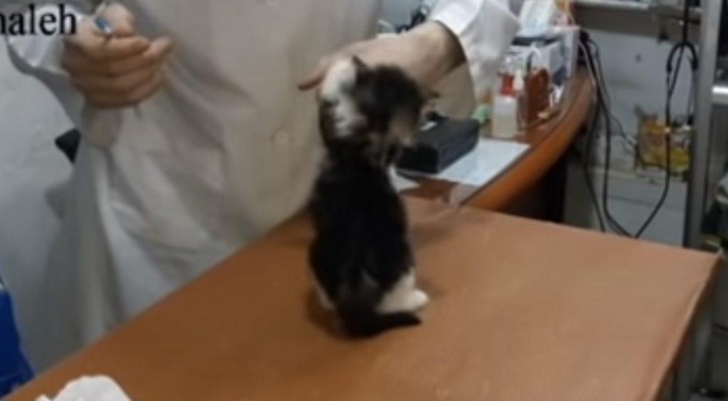 「や、やめニャさい!」注射をイヤがる子猫がかわいすぎる!