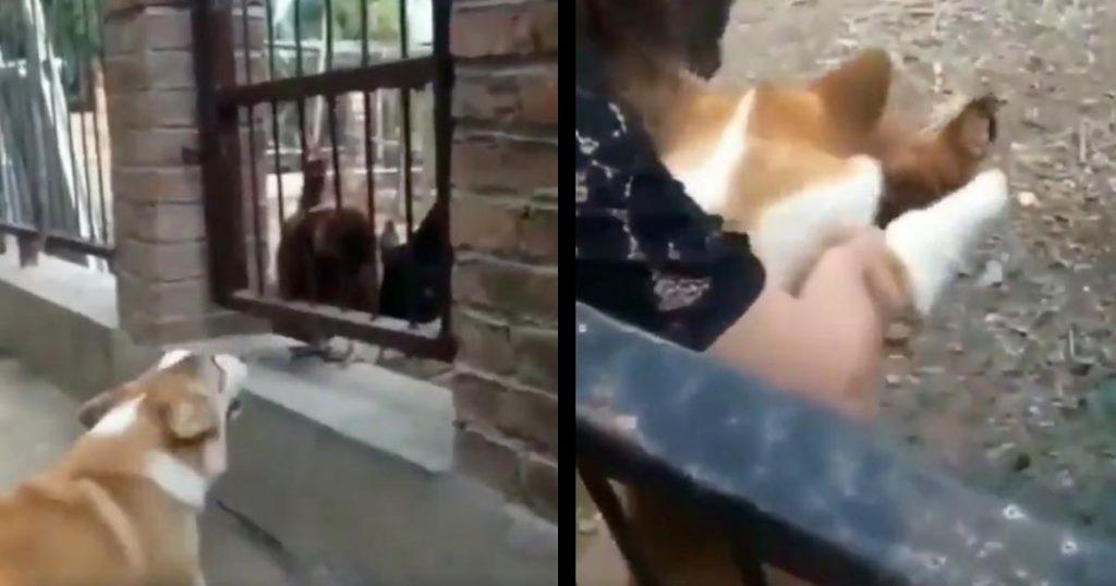 フェンス越しにニワトリに強気でケンカを売っていた犬。しかしフェンスの向こうに行かせたら弱すぎた笑