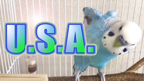 DA PUMPの「U.S.A.」を歌うインコが話題に!リーダーのISSAさん本人もコメント!【続編あり】