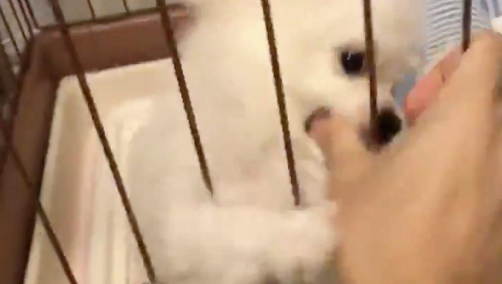 【爆笑】犬に手を舐められて大騒ぎのフリーザ様の声マネをする飼い主さん。似すぎていてヤバいと話題に!