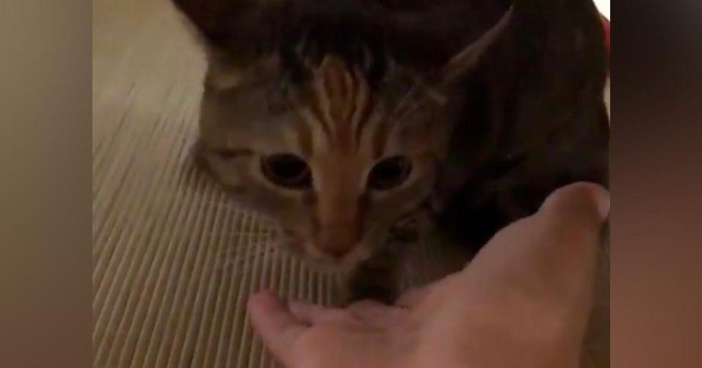 甘えてきたと思ったら突然の豹変!他の猫と「浮気」していたことが愛猫にバレてしまった時の反応がスゴい笑
