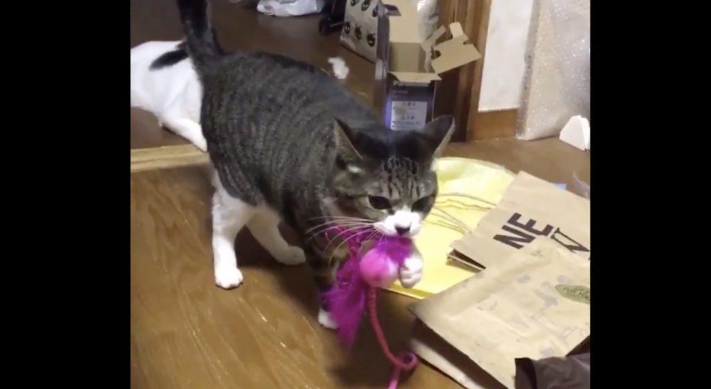 遊んでほしい時は、自分の手で鈴を鳴らして「無言の圧力」をかける猫が可愛すぎると話題に!