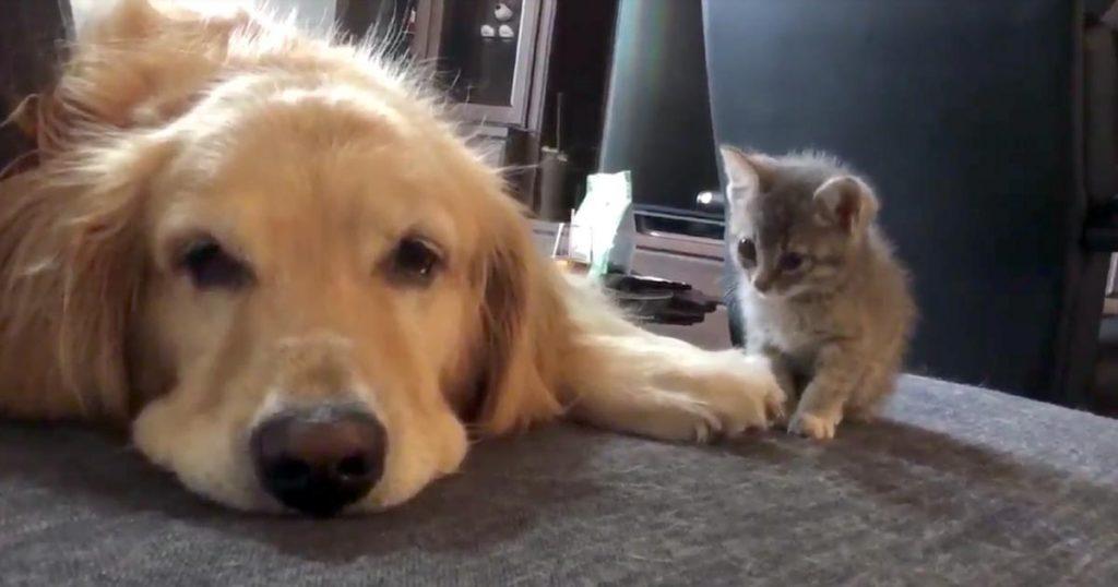 恐る恐る先住犬に近づく、ゴミ捨て場から拾われた子猫。2匹が打ち解けた瞬間の映像に涙!