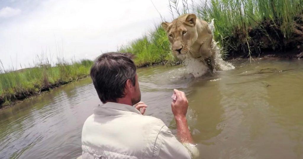 「もう水は怖くないよ」溺れていたところを助けてくれた命の恩人に、7年ぶりに再会した野生ライオンの行動に涙!